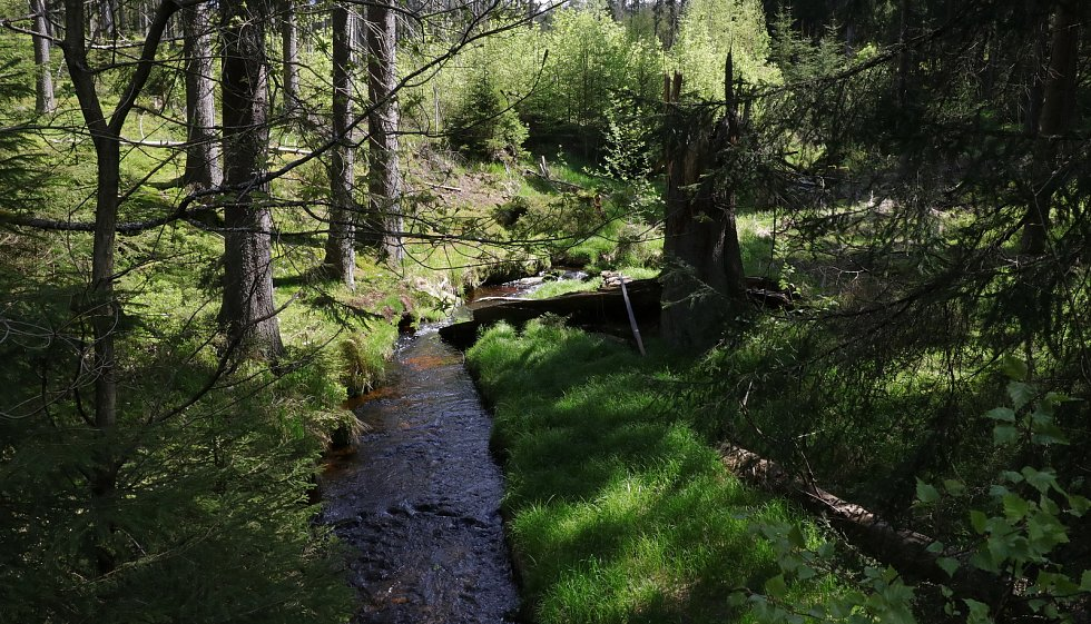 K tůňkám, potoku, na louky i k rybníku zavedla návštěvníky sobotní akce Sklářskou stezkou pohledem zoologa