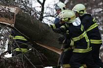 Dobrovolní hasiči z Plané odklízejí přes silnici popadané stromy.