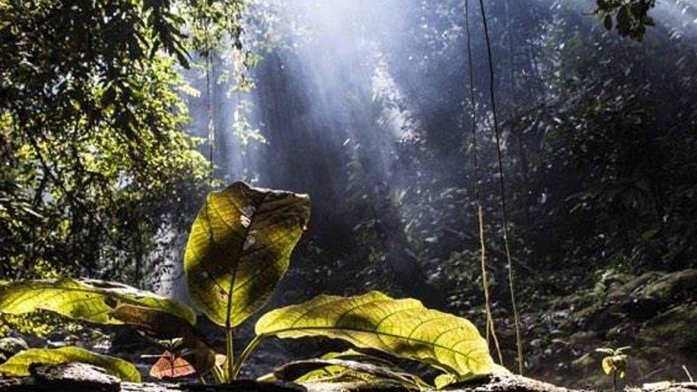 Deštný prales na archivním snímku projektu Green Life
