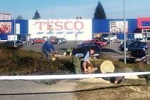 ODBORNÁ firma pokácela vzrostlý strom před hypermarketem Tesco v Tachově. Příčinou byl špatný zdravotní stav stromu. Společnost vysází několik jiných nových stromů.