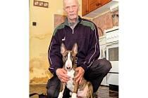 """CHOVATEL Ivan Houf s ročním štěnětem anglického bull teriéra, kterému se musí věnovat denně několik hodin, aby pes měl kvalitní výcvik. """"Co se pes nenaučí do roka, učí se pak těžko. Jde to i pak, ale s obtížemi,"""" říká Houf o výchově."""