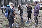 Stříbro - Žáci stříbrské Základní školy Mánesova vysázeli více než třicet mladých buků.