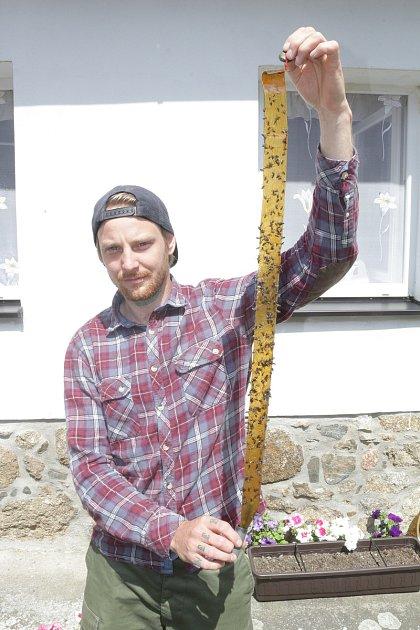 Pavel Kraus zTelic má doma roční dcerku. Na snímku ukazuje mucholapku, na kterou se hmyz nachytal za jediný den. Podobných mají doma několik.