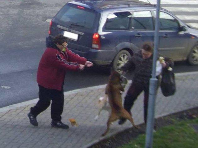 Potyčka, při které volně pobíhající pes napadal psa na vodítku, skončila několika zraněními. Ženě, která měla svého psa řádně na vodítku, pomohl náhodný kolemjdoucí.