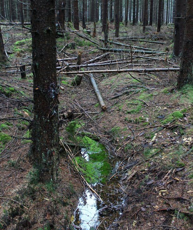 Koryto potoka sice pokračuje ještě asi sto metrů výše, ale je téměř vyschlé.