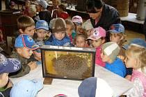 Včelaři vystavili včelstva