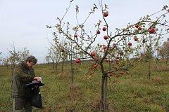 V genovém sadu v Tachově roste na šest set ovocných stromů