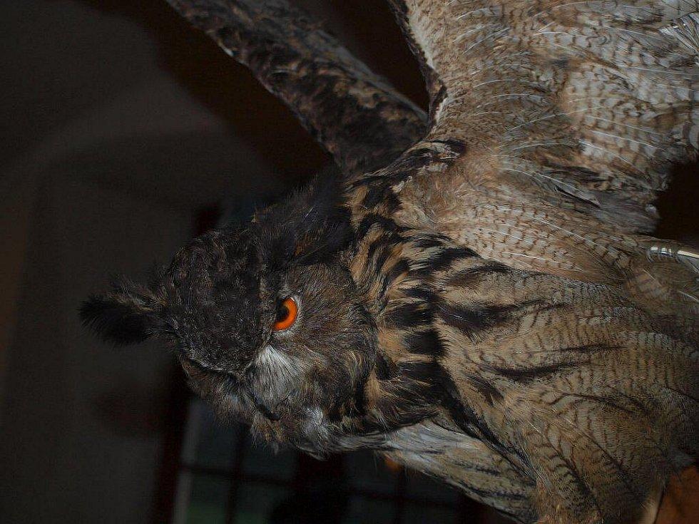 Borský zámek hostil netopýry