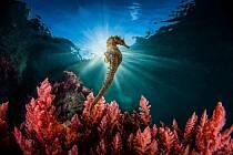 Vítězná fotografie kategorie slaná voda, jejímž autorem je Marco Gargiulo.