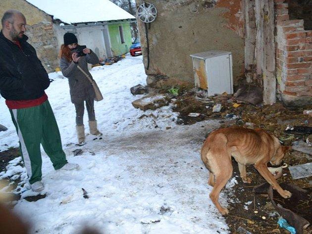 NA ŘETĚZU, mezi odpadky a o hladu. Majitelé chodili denně kolem svých zubožených zvířecích svěřenců.