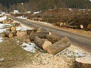 Stromy pokácené v Přimdě.