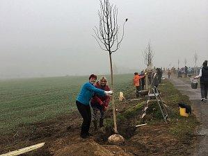 TISOVŠTÍ OBYVATELÉ vysokou účastí na výsadbě nové Lipové aleje prokázali, že jim záleží na místě