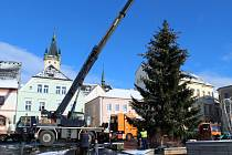 SMRK ZTEPILÝ, poražený v areálu tachovských kasáren, bude letošním vánočním stromem v Tachově. Na náměstí byl dovezen v pondělí dopoledne.