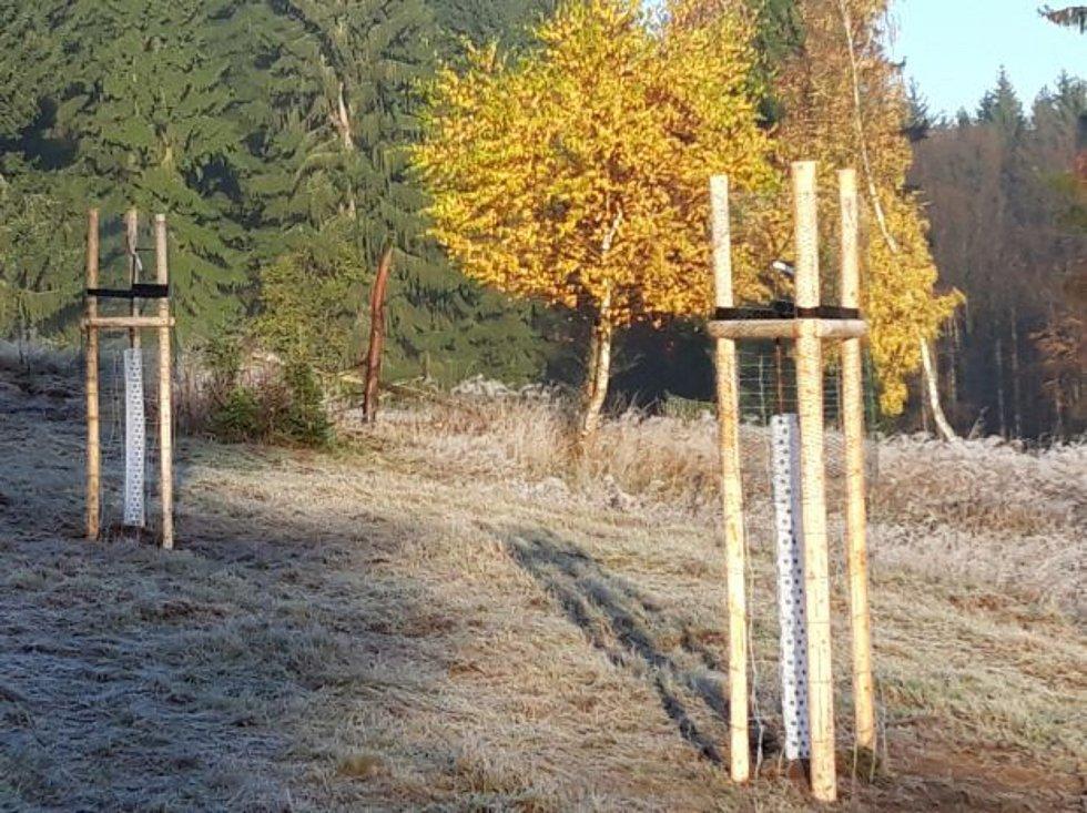 Pohraniční Obora založila vlastní jabloňový sad.