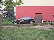 Pštros se porval s klokanem a utekl.