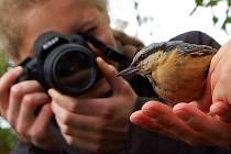 Při vítání ptačího zpěvu jsou drobní opeřenci často středem pozornosti i fotografů, kteří tak mají možnost zblízka pořídit snímek všedního i vzácnějšího ptáka.