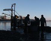 Rybáři ve čtvrtek od rána připravovali vše potřebné, aby výlov byl úspěšný