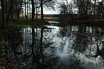 Starousedlíci uklidili břehy rybníka v Chodové Plané