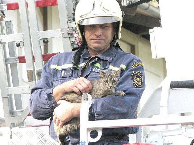 Kočka na střechu vylezla, zpět už ne. Sundali ji hasiči.