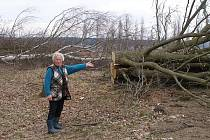 Stromy padly za oběť elektrárně