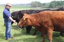 Robert Van Es se svými kravičkami.