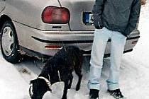 Údajná nálezkyně psí rodinky přivezla do Studánky na Tachovsko prý z Postřekova na Domažlicku tuto fenu a sedm jejích štěňat.