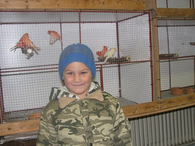 Výstava ptactva ve Stříbře