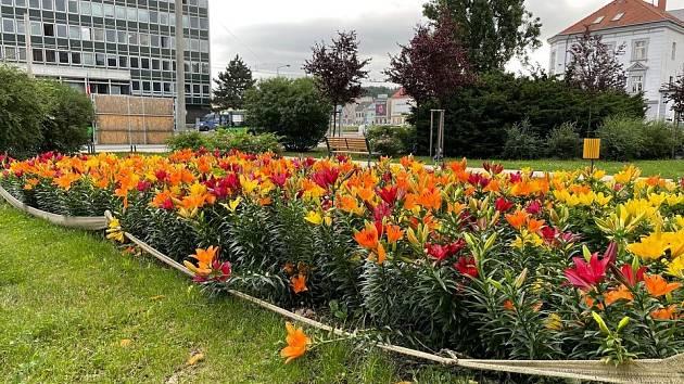 Rozkvetlé záhony lilií v parku naproti soudu v Ústí nad Labem.