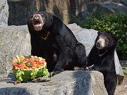 Akce Netradiční chutě pralesa v ústecké zoo. Součástí akce byly křtiny samičky medvěda malajského. Čestným kmotrem byl herec Martin Dejdar.