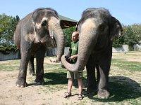 Chovatel Jan Javůrek se slonicemi Delhi a Kalou.