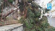 Strom spadl také v areálu sexuologického oddělení Masarykovy nemocnice.
