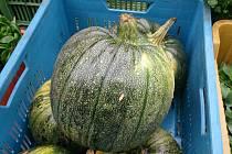 Ve čtvrtek 22. října budou Severočeské farmářské trhy opět v Ústí nad Labem.