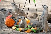 Velikonoční soutěže v ústecké Zoo. Pro výherce je nachystané vejce nandu pampového.