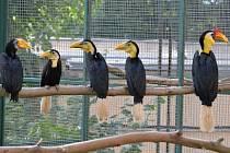 Zoborožci v ústecké zoo.