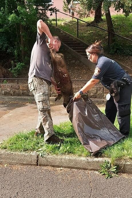 Práce ústeckých strážníků je náročná a velmi pestrá