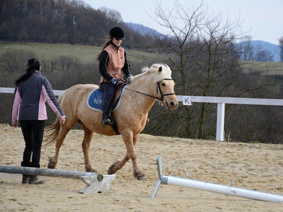 Klienti společnosti Helias navštívili koníky v Mirkově.