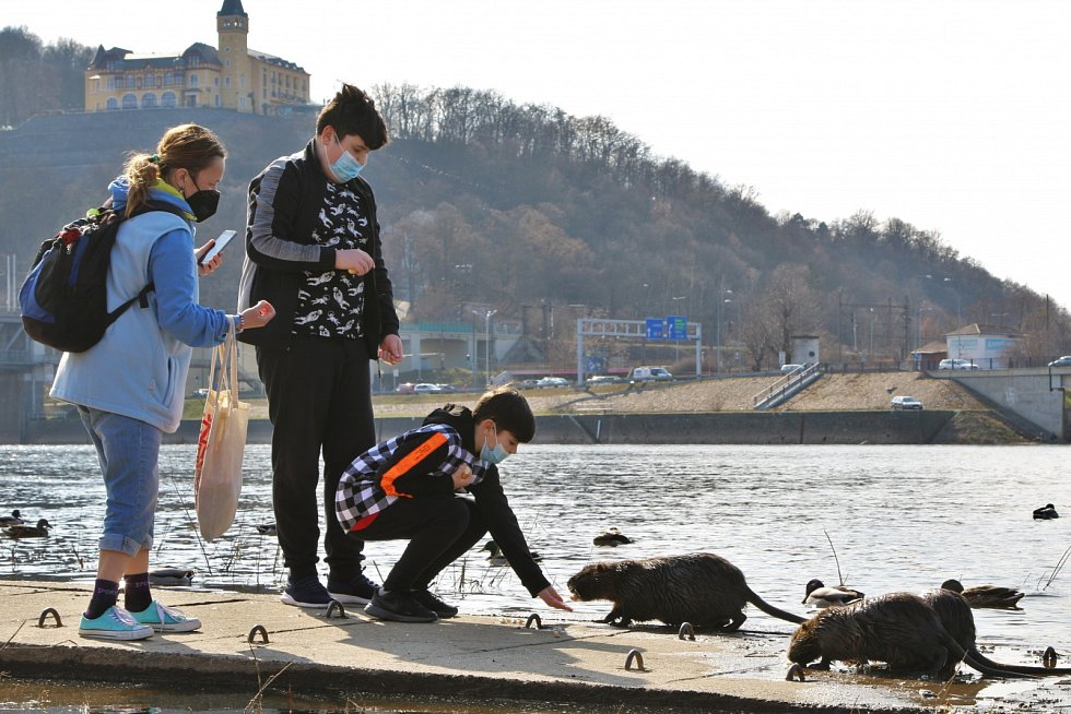 Příjemné jarní počasí lákalo Ústečany k procházce podél vody.