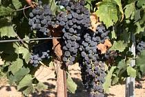 Oblíbené červené víno je podle Francouzů v malých dávkách zdravé.