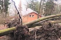 Vyvrácené stromy na ústeckém Střížovickém vrchu.