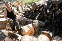 Samotěžbu, vlastnoruční výrobu palivového dřeva, nabízejí na Ústecku obce i Lesy ČR. Ilustrační foto.