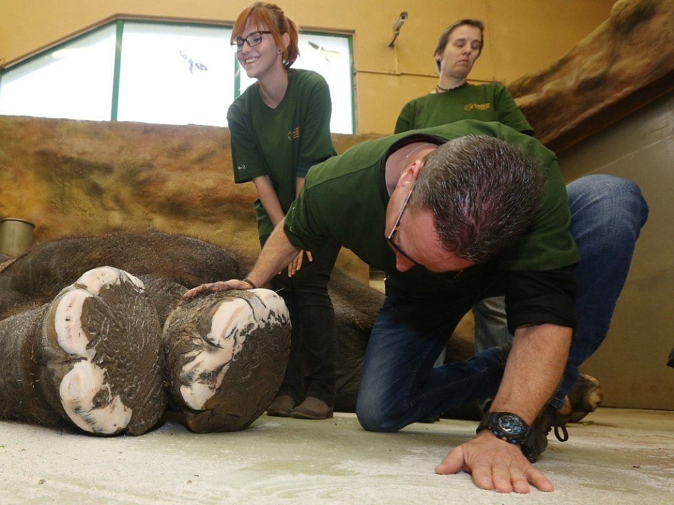 NA PEDIKÚŘE byla slonice Kala z  ústecké zoologické zahrady. O její nohy se postarali ošetřovatelé Petr Kiebel a Jan Javůrek.