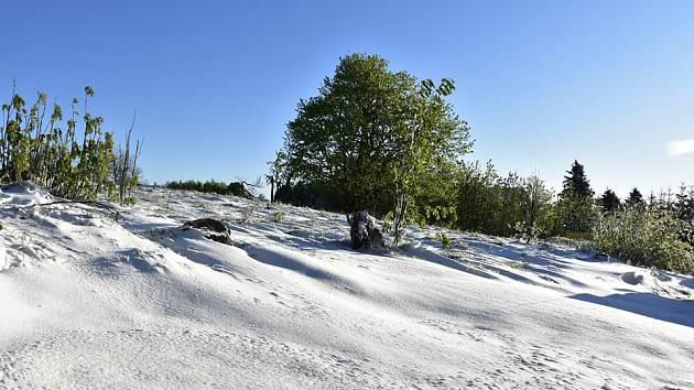 Čerstvý sníh u Nakléřova na Ústecku. 12. května