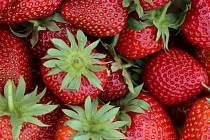 Jahody ze Svádova. Ilustrační foto