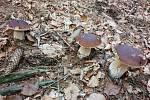 O tento krásný pohled z houbaření v Krkonoších se podělila Lenka Brhelová
