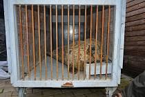 Do ústecké zoo příjela tulení samička Sally z Nizozemska.
