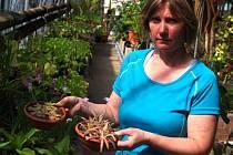 DEN FASCINACE ROSTLINAMI se v sobotu konal ve sklenících a zahradě Naučného botanického parku UJEP.