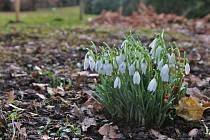 V zahradách zámeckého parku ve Velkém Březně se objevují první poslové jara.