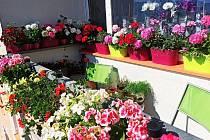 Ceny za TOP květinové Ústí 2020 byly rozdány.