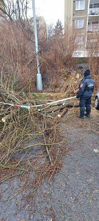 Strom na Severní Terase padl na zaparkovaná auta