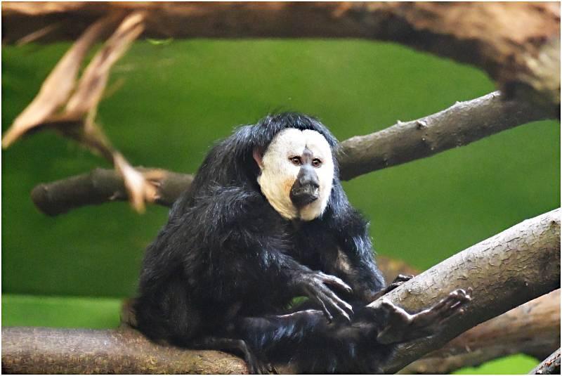 Ústecká zoo se po pandemii konečně probouzí. Byli jsme se tam podívat.